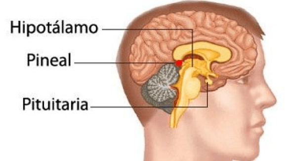 descr-imagen-melatonina-medical-green-dismundonatural